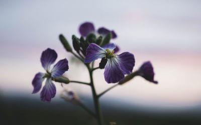 Mein Seelenstein – das Gedicht